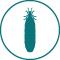 traitement contre les termites